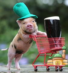pig with beer trolley